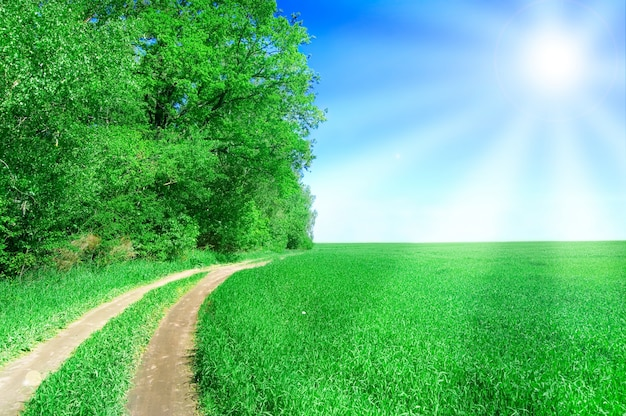 Dirt Way In A Green Field With Sun Photo