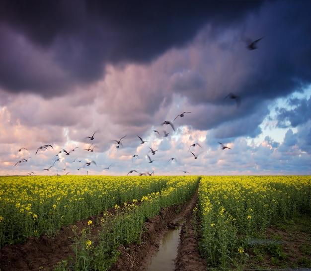 Dirt way with dark clouds Free Photo