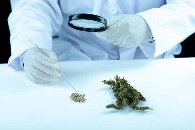 Doctor hand hold and offer to patient medical marijuana and oil. Free Photo