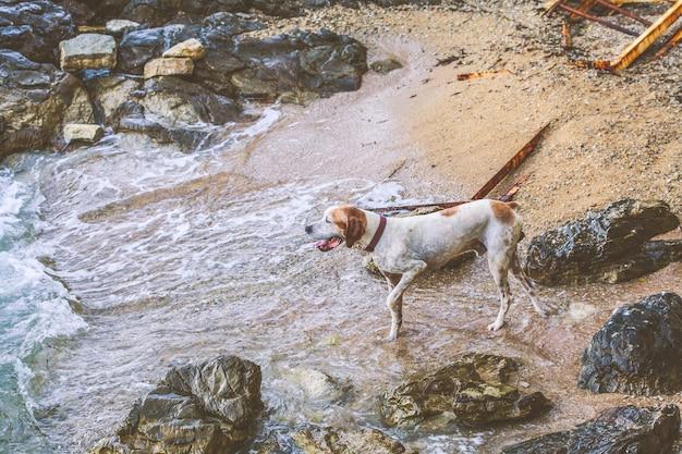 Dog on the beach next to the sea Premium Photo