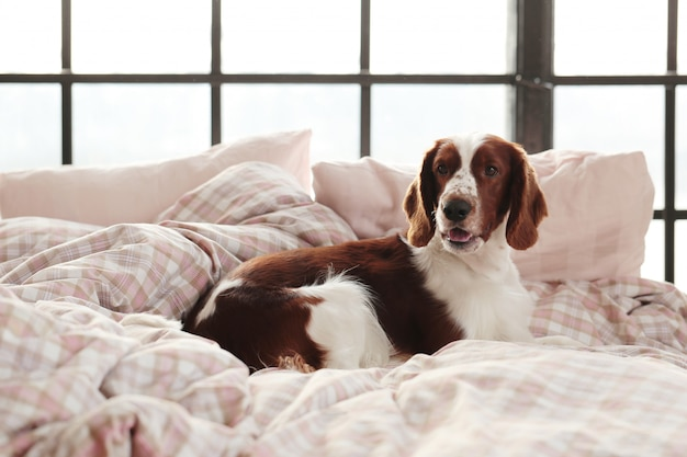 Dog in bed in the morning Free Photo