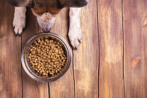 Dog and bowl of dry kibble food Premium Photo