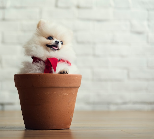 Dog canine animal mammal pet puppy Free Photo