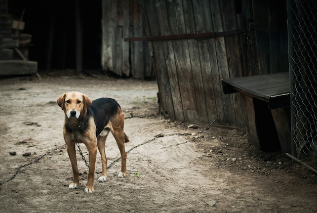 Dog on a chain, the dog next to the booth, the dog in the yard Premium Photo