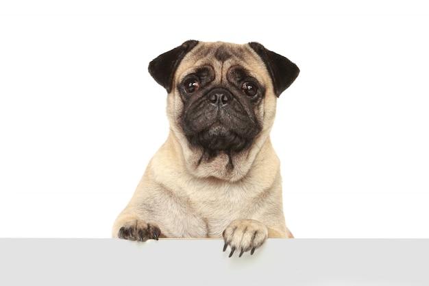 Собака собака Premium Фотографии