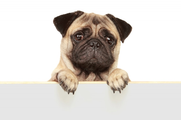 Dog dog isolated Premium Photo