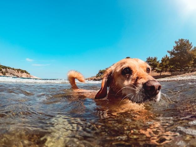 Dog enjoying on the beach while swimming in the sea Premium Photo
