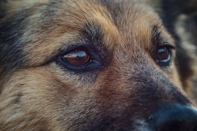 Dog face close up. homeless dog eyes Premium Photo