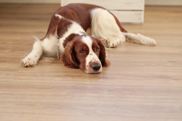 Dog on the floor Free Photo