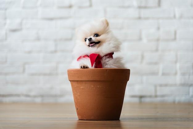 Dog friend cute canine smiling Free Photo