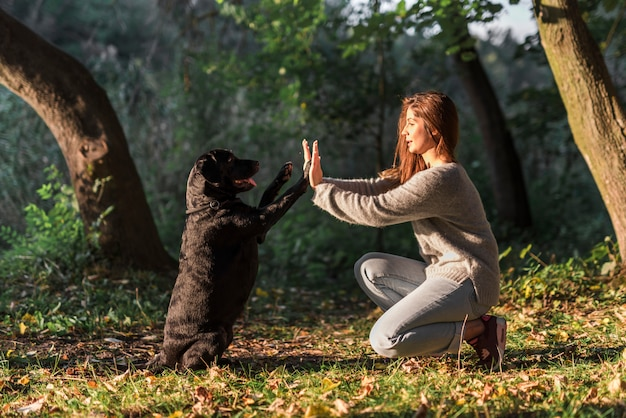 Dog giving high five to his pet owner at park Free Photo