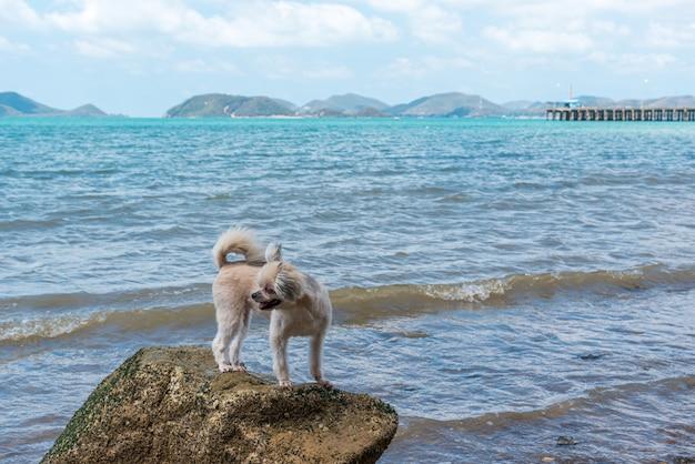 Dog happy fun on rocky beach when travel at sea Premium Photo