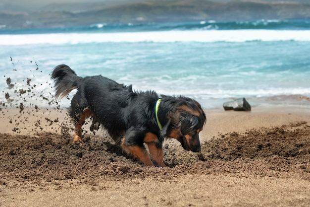 Dog having fun in summer by digging in the sand on the shore of the beach. Premium Photo