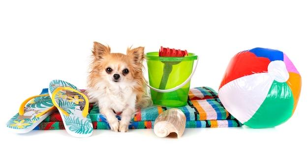 Dog in holidays Premium Photo