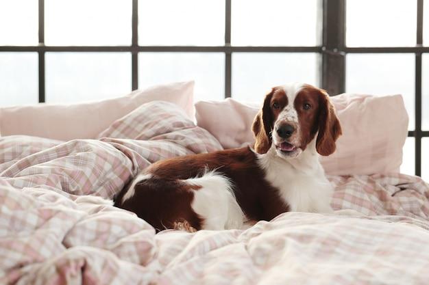 Собака в постели по утрам Бесплатные Фотографии