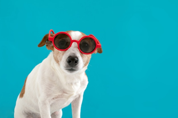 赤いサングラスの犬 Premium写真