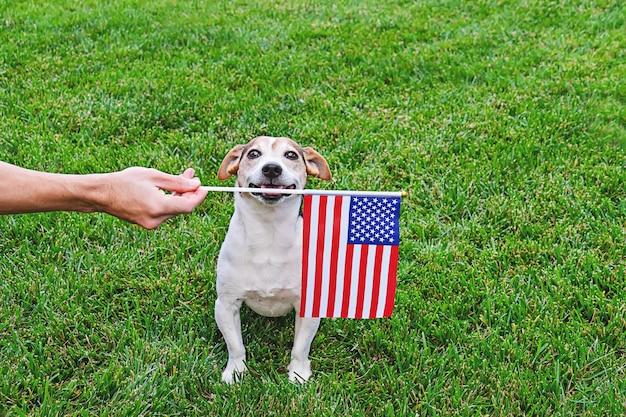 Собака в звездных и полосатых очках с американским флагом Premium Фотографии