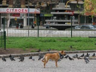 公園で犬 無料写真