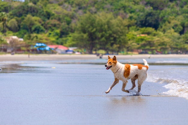 The dog is playing on the beach. Premium Photo