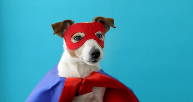 Dog jack russell super hero costume Premium Photo