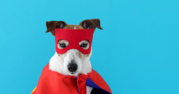 Dog jack russell super hero costume Premium Photo
