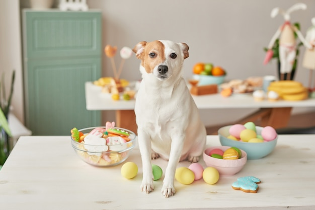 Dog jack russell terrier on easter sitting on the table in the kitchen with eggs and gingerbread Premium Photo