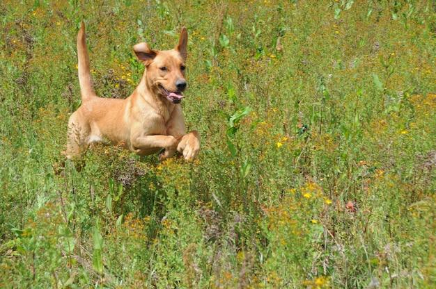 Dog jumping through long grass Premium Photo