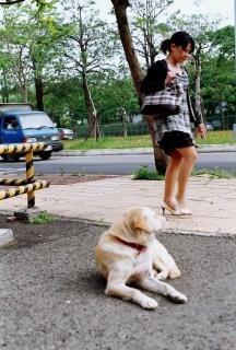 Dog looking at woman Free Photo