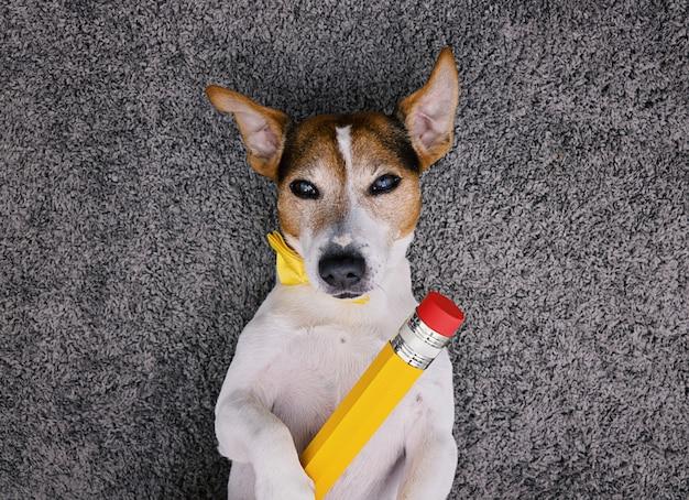 Dog lying on gray background with big yellow pencil Premium Photo
