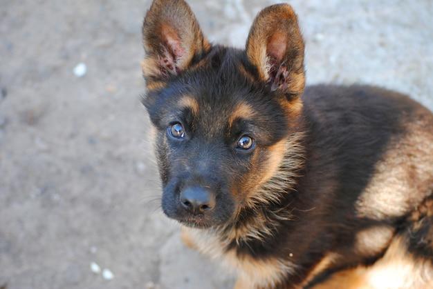 Dog - man's best friend Premium Photo