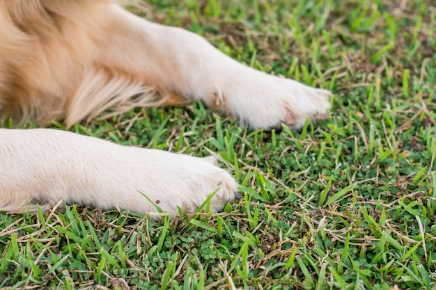 Dog paws in the green grass. Premium Photo