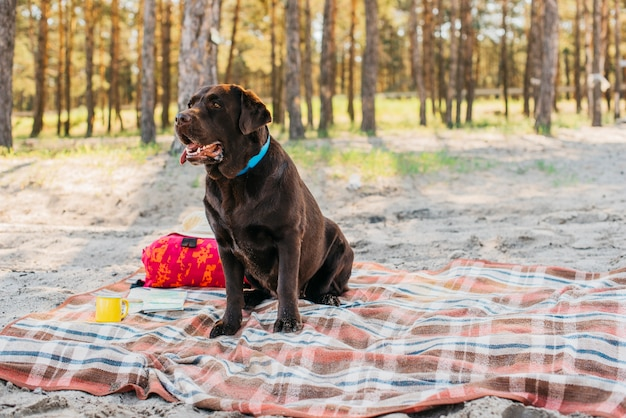 Dog on picnic cloth in nature Free Photo