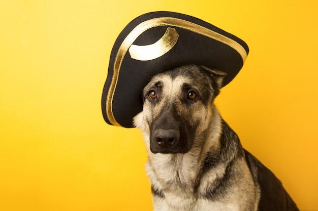 Dog pirate - eastern european shepherd dog dressed in a pirate Premium Photo
