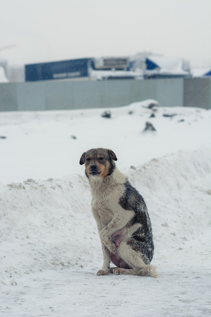 The dog pushes the paws from the cold Premium Photo