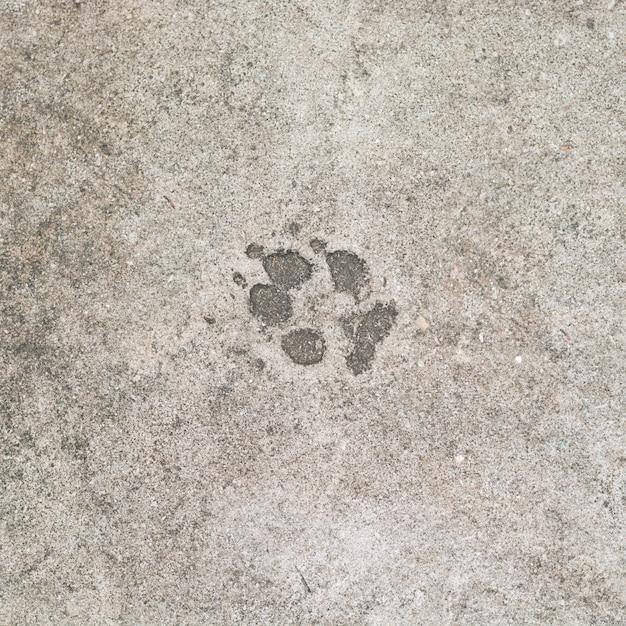 Dog 's footprints on cement floor background Premium Photo