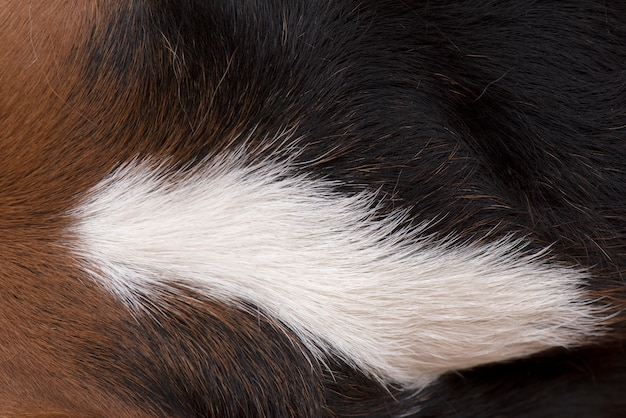 The dog's hairs are brown, white and black Premium Photo