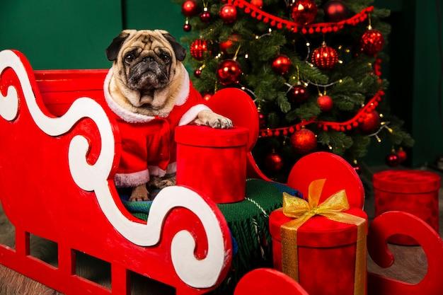 Dog santa riding santa sleight for christmas Free Photo