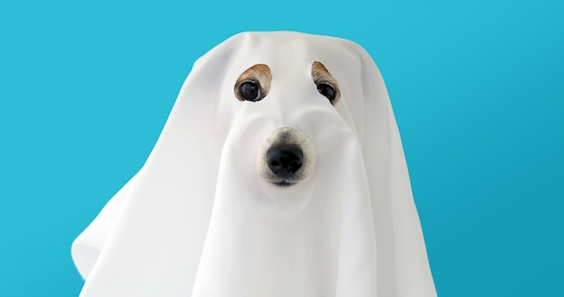 Dog sit as a ghost scary and spooky Premium Photo