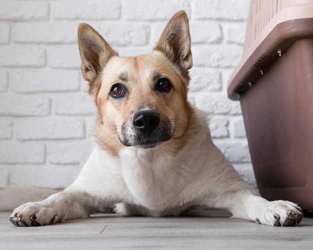 犬小屋の近くに座っている犬 無料写真