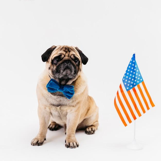 独立記念日に床に座っている犬 無料写真