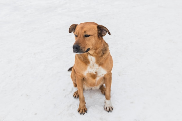 Dog sitting on white snowy land Free Photo