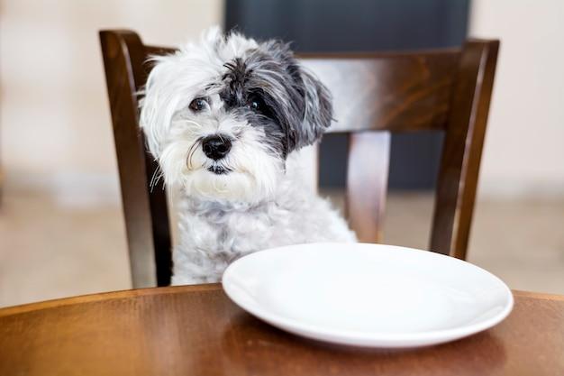 Cane seduto su una sedia di legno Foto Gratuite