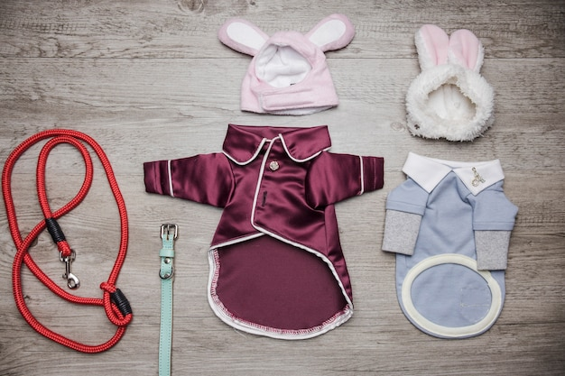 Dog sleepwear and walking lead Free Photo