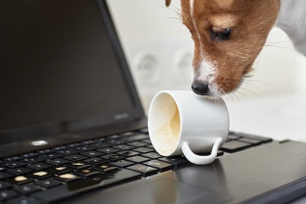 ノートパソコンのキーボードにコーヒーをこぼす犬 Premium写真