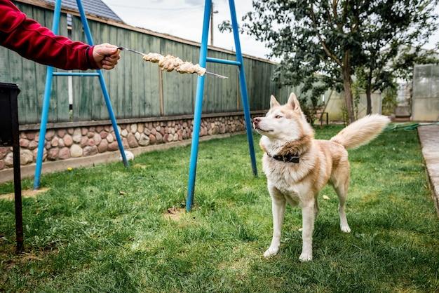 バーベキューの近くに立って飼い主を見上げている犬。 Premium写真