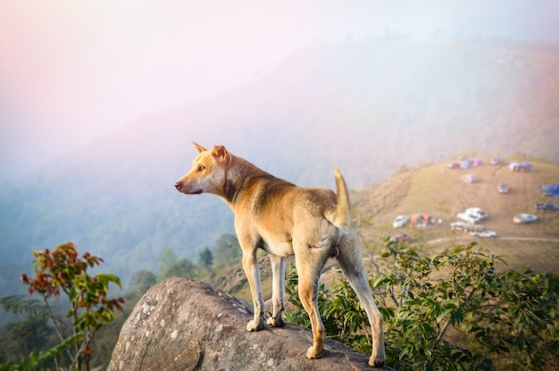 Dog standing on rock / landscape of dog stand on hill view of