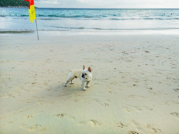 A dog walking on the beautiful beach. Premium Photo