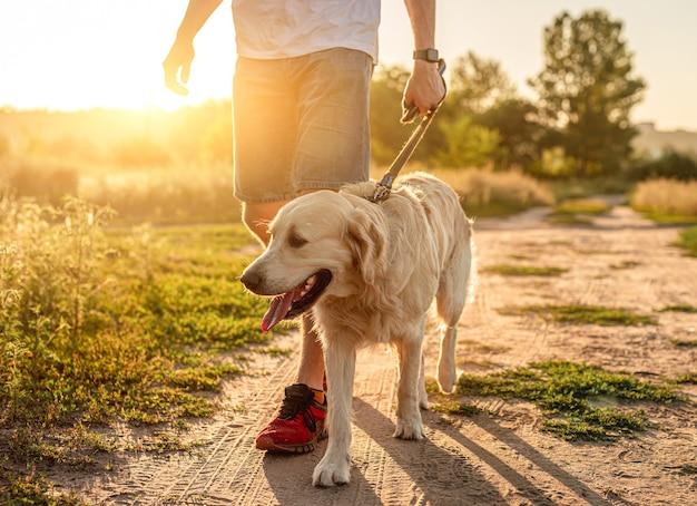 Собака гуляет с человеком по грунтовой дороге на закате Premium Фотографии
