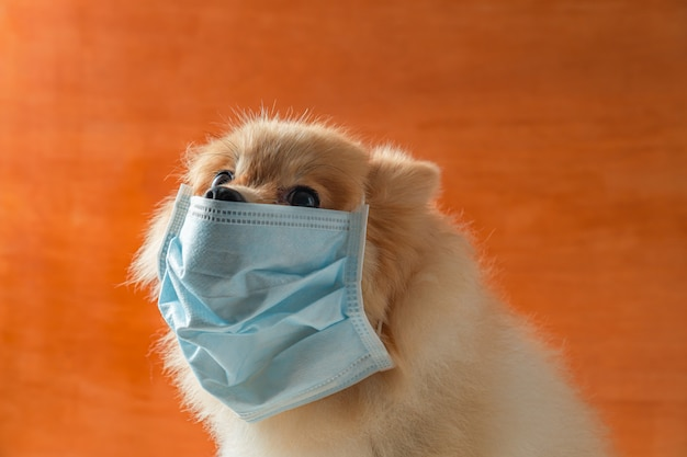 Dog wearing air pollution mask for protect dust pm2. Premium Photo