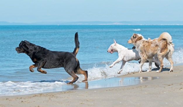 Dogs on beach Premium Photo